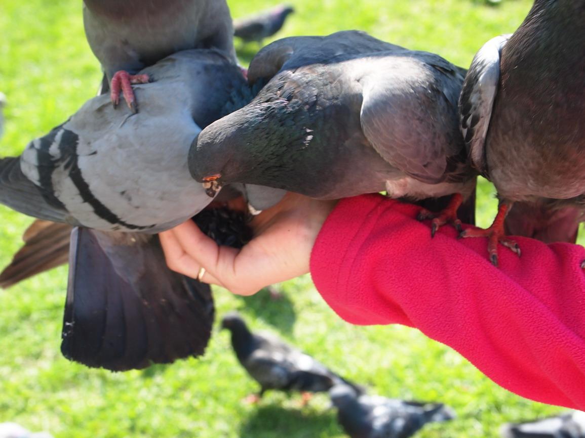 голуби в юсуповсом саду